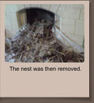 The nest was then removed.